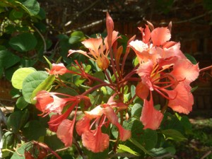 ornage flowersJPG
